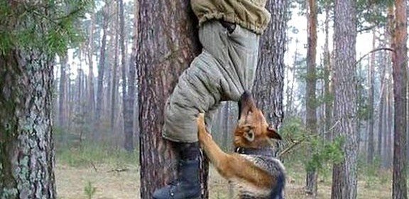 Dog grabbing a man climbing a tree
